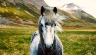 Conoce tu animal espiritual por la fecha de nacimiento