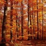 Consejos para decorar la casa en otoño