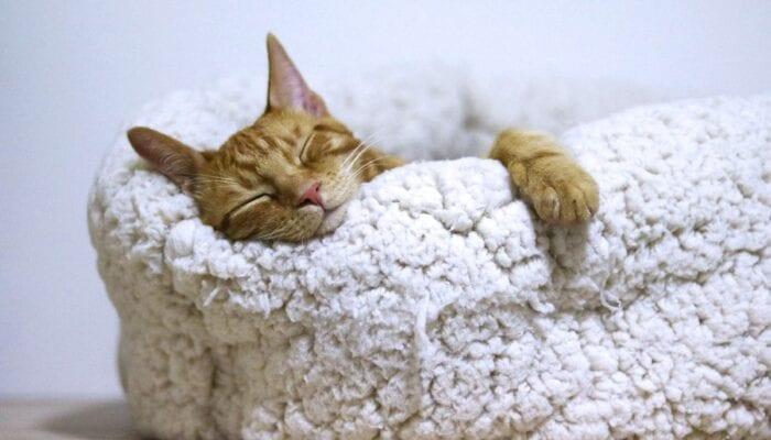 Técnicas de relajación para dormir profundamente toda la noche